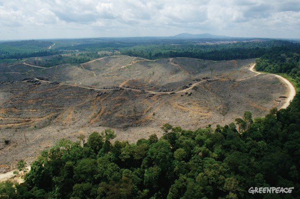 forest-destruction-sinar-mas
