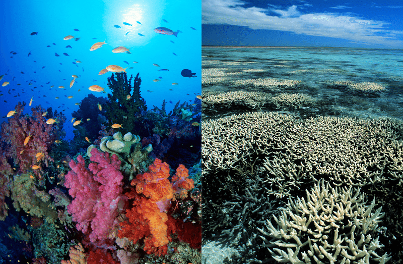 reef-side-by-side-1